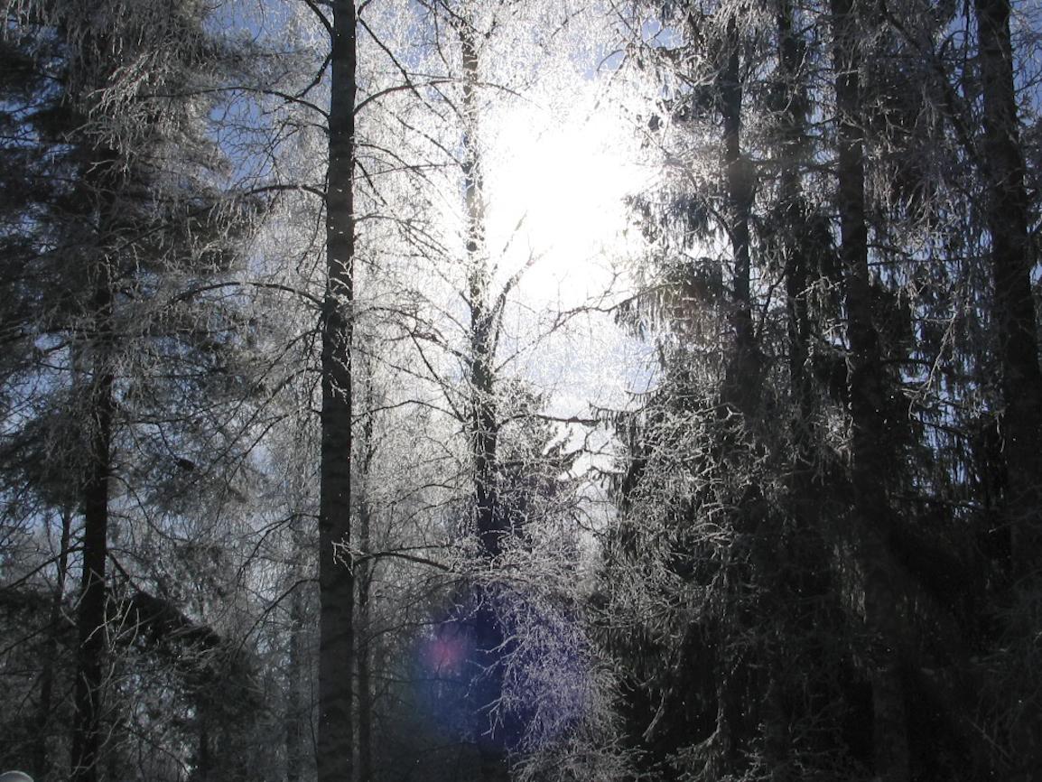 Hämärä talvinen metsä