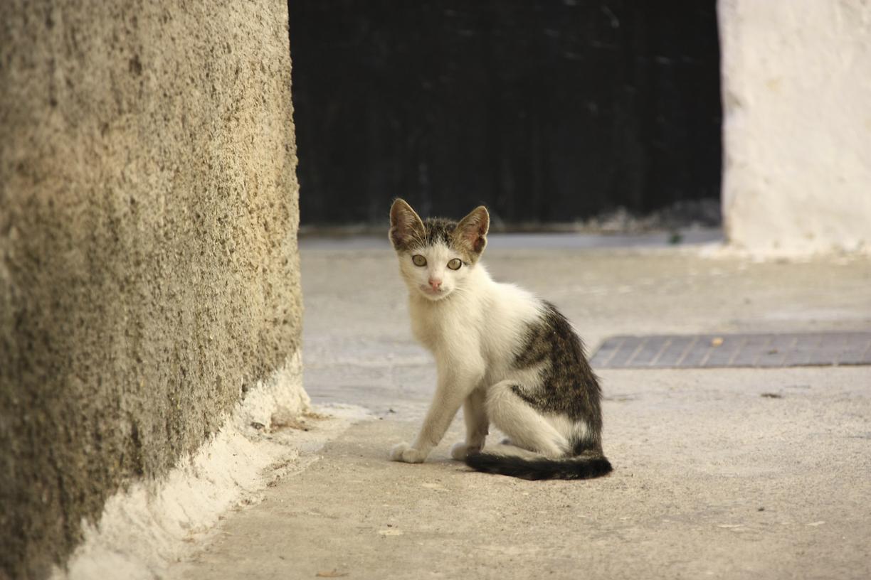 Pieni kissa kadulla