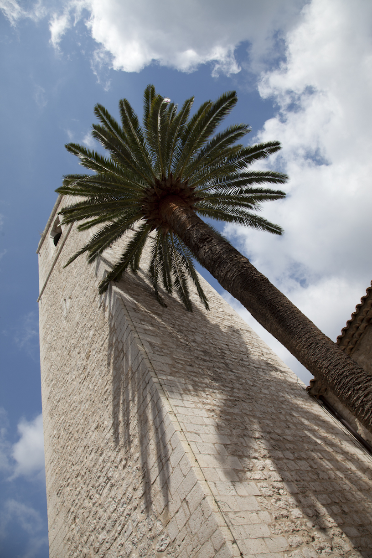Palmu ja torni
