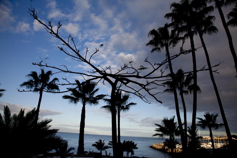 Lehdetön puu ja palmut